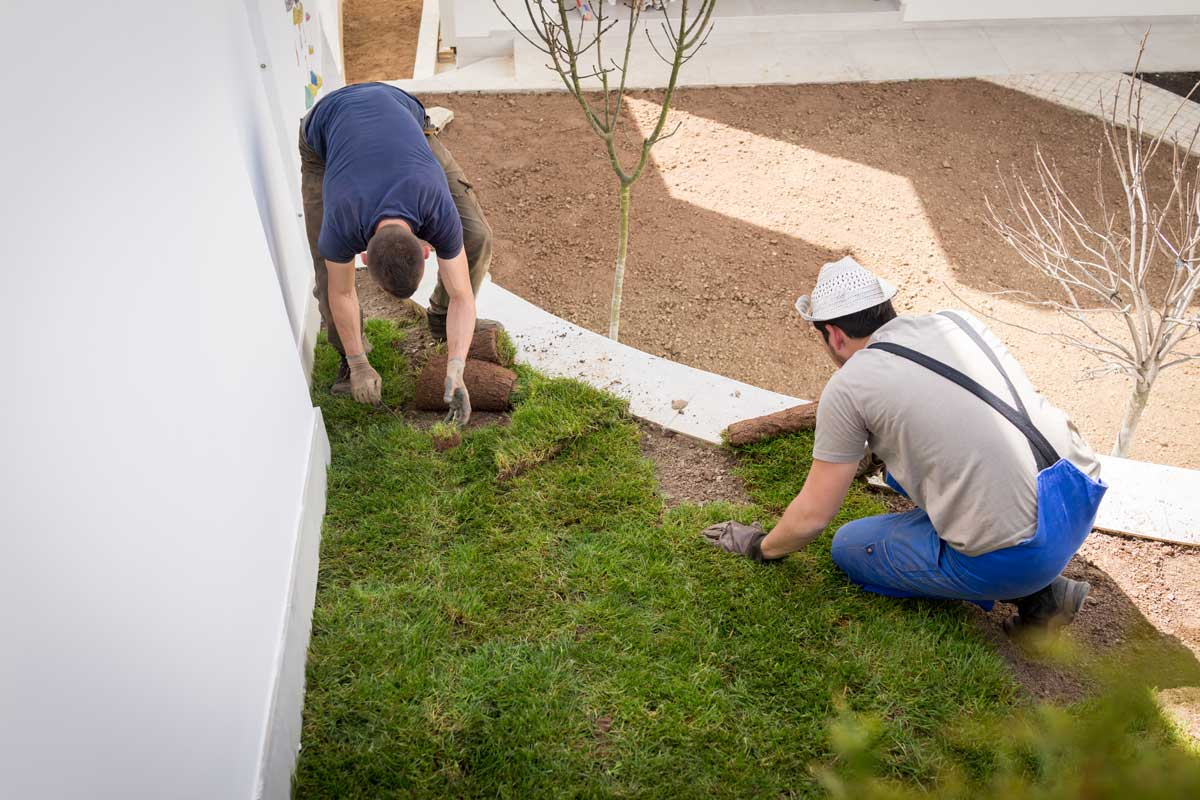 landscaping men laying new turf