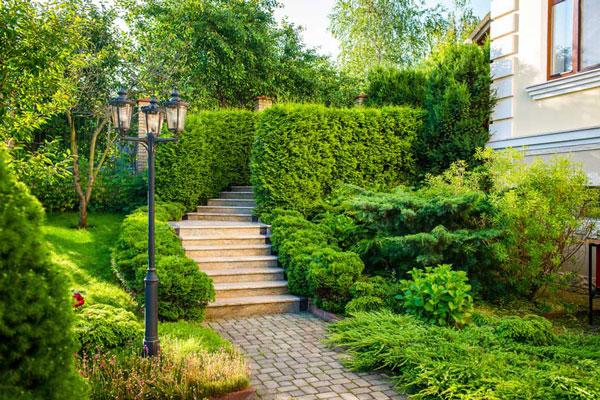 paving steps bushes grass landscape