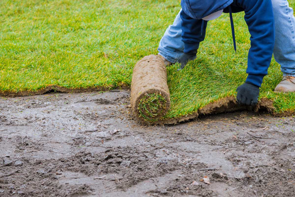landscaper laying turf
